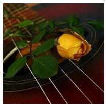 guitar an rose